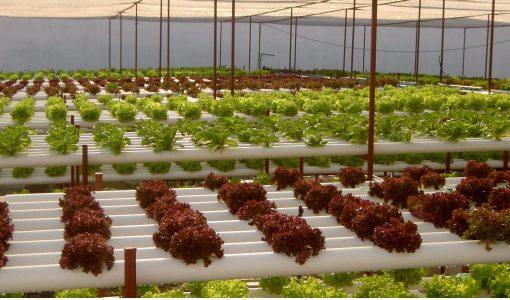 hydroponic supplies canada